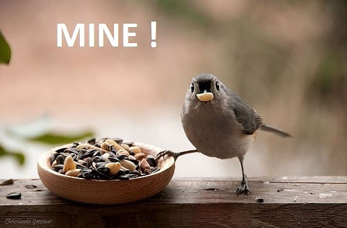 funny-bird-eating-peanuts